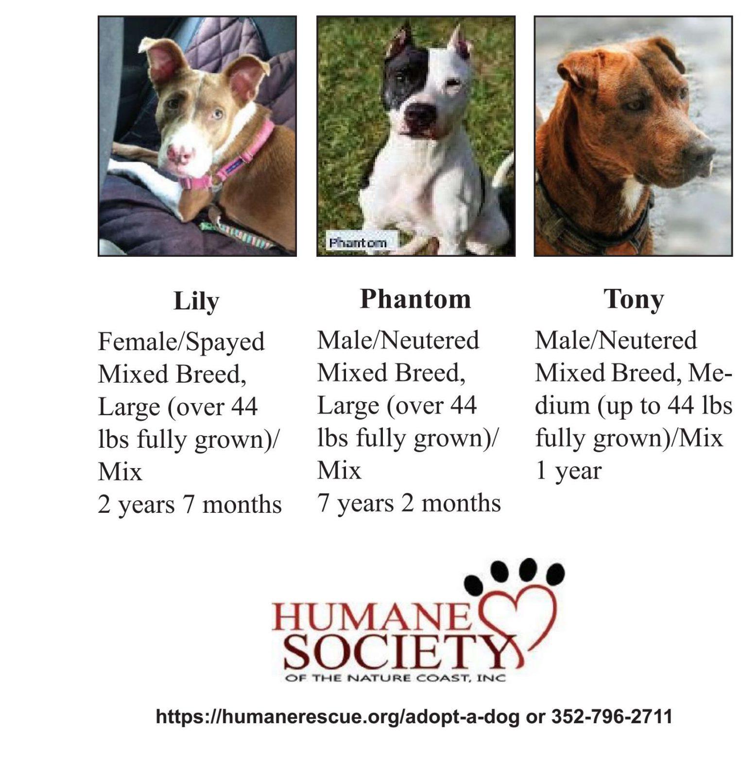 Humane Rescue Hernando 05-19