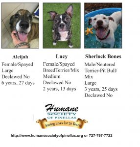 Humane Society of Pinellas 05-19