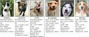 Dogs for Adoption - Boomerz of America June 2019