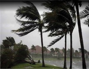 Hurricane with Palm Tress blowing