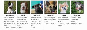 July 2019 Pets for Adoption