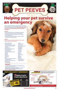 Boomerz August 2019 Pet Peeves Helping your pet survie an emergency