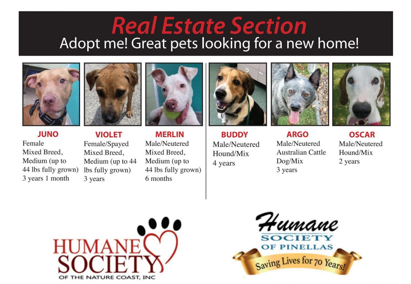 Boomerz August 2019 Adoption page